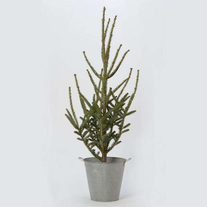 700_terrain-tabletop-tree