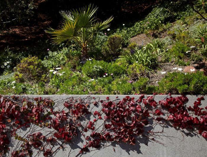 700_tiburon-garden-ivy-wall