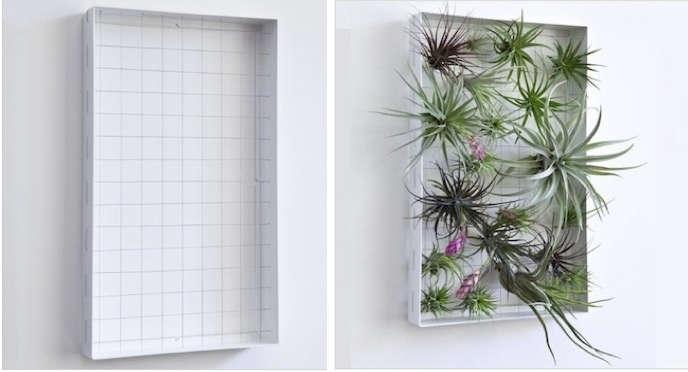 air-plant-frame-montage