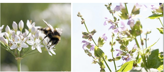 bee-pollinator-garden-seed-montage
