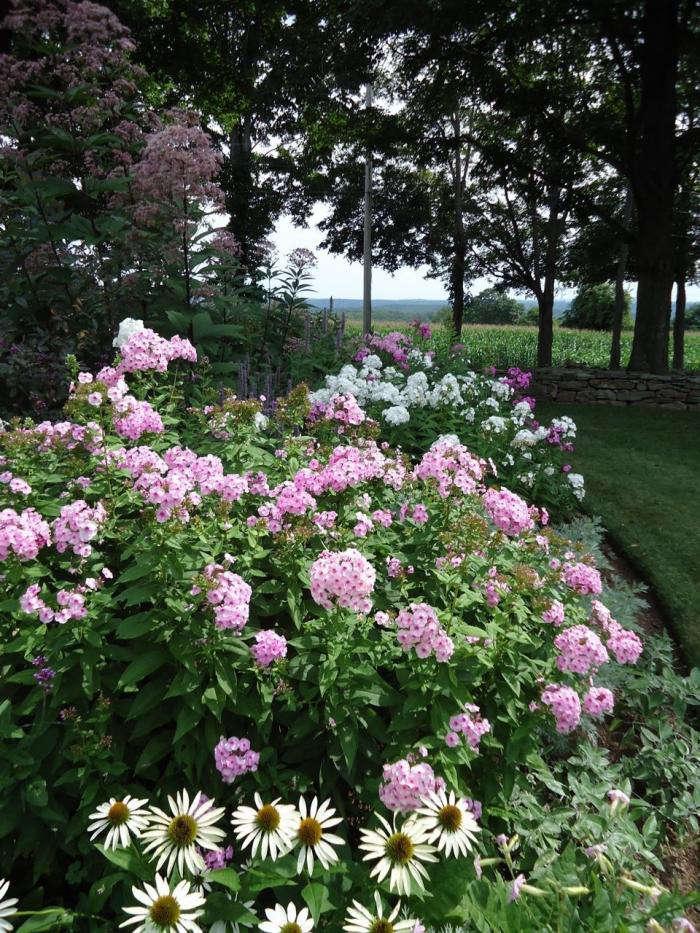 700_leva-garden-phlox-and-daisies