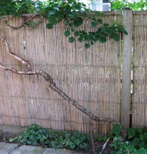 bamboofencequick