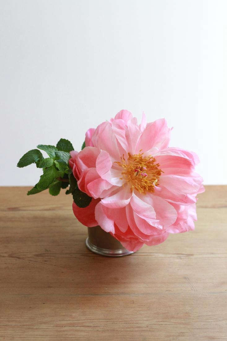 peony on table vertical