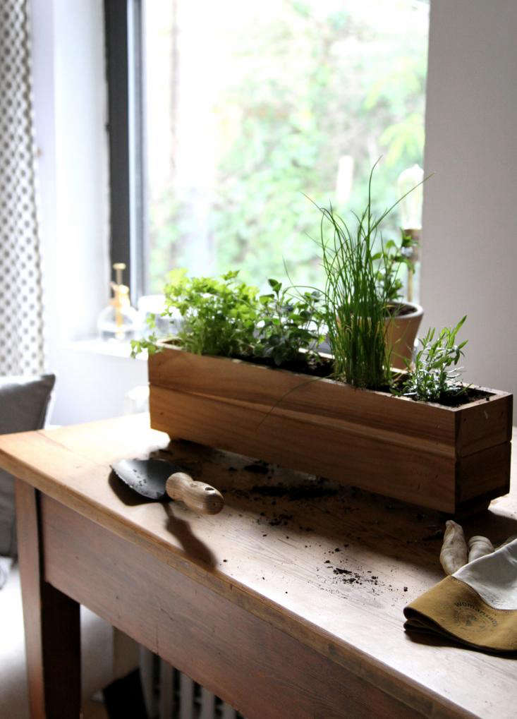 DIY: Shade-Tolerant Herbs To Grow In Your Apartment