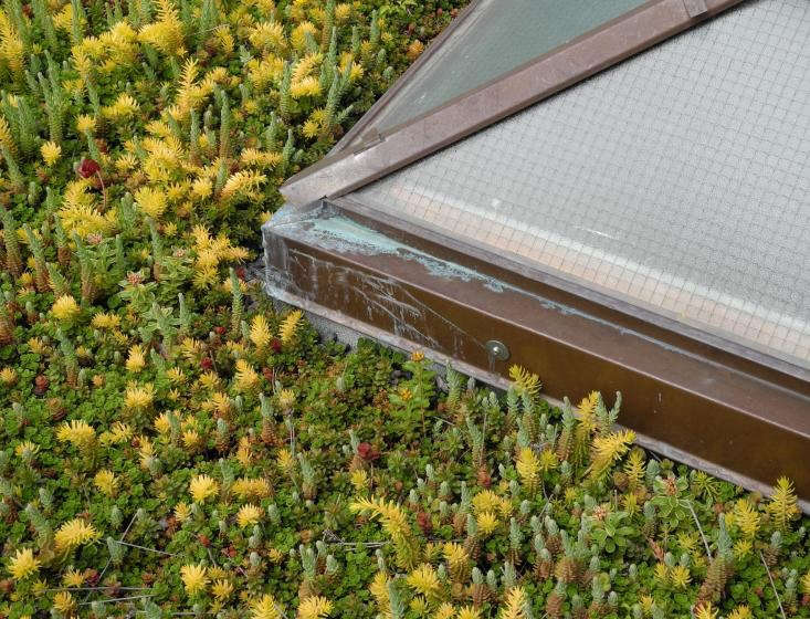 skylight and sedum