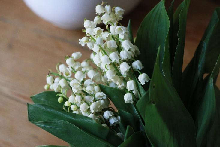 three bunches of lily of the valley