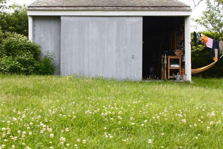 clover-dandelion-lawn-justine-hand