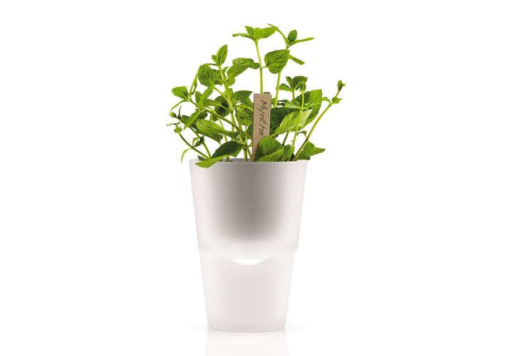 eva-solo-self-watering-herb-pot-gardenista