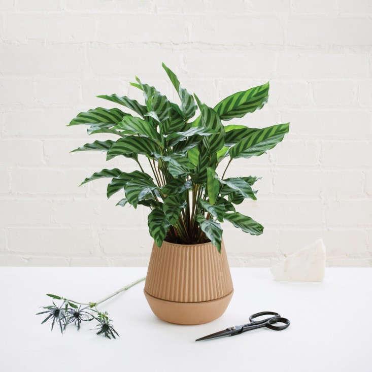 self-watering-pleated-terra-cota-planter-gardenista-733x733