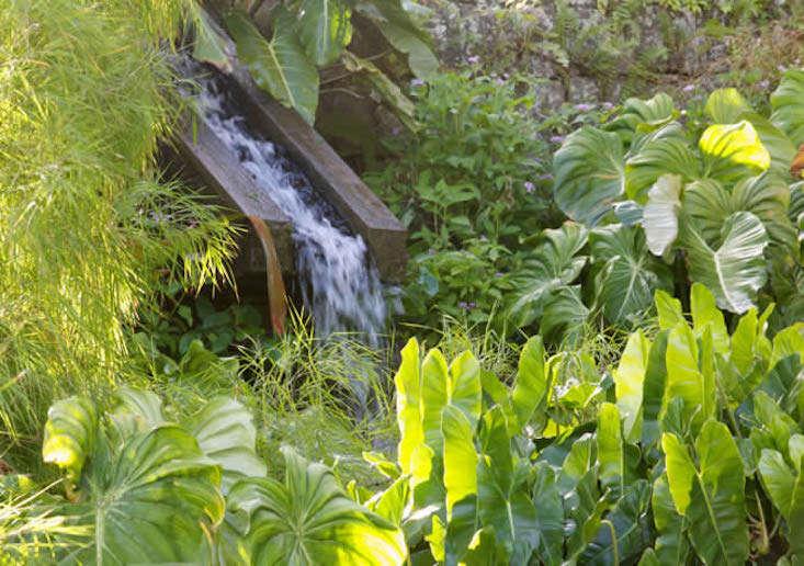 nevis-e-garden-water-gardenista