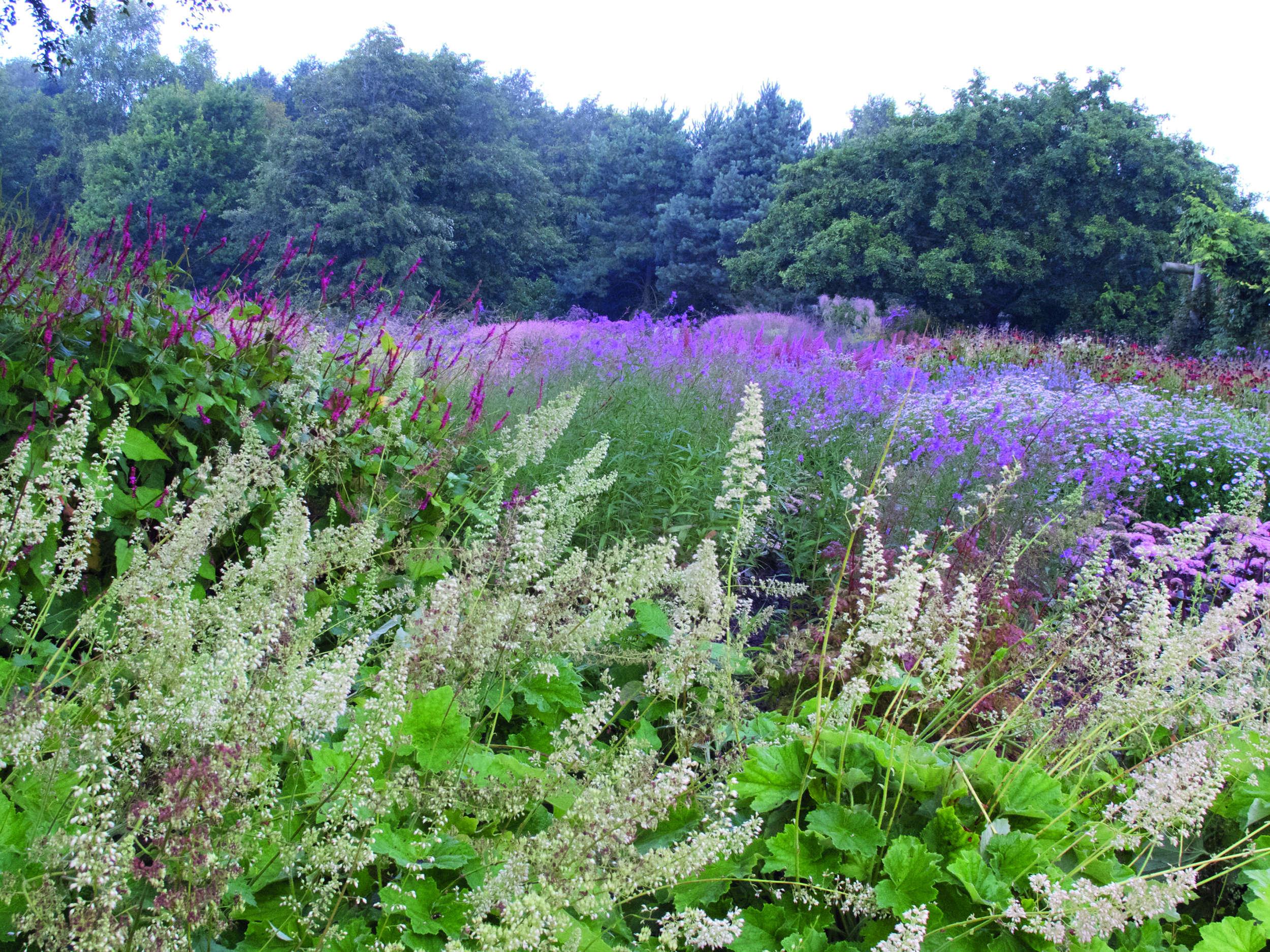 10 garden ideas to steal from superstar dutch designer for Piet oudolf pflanzen