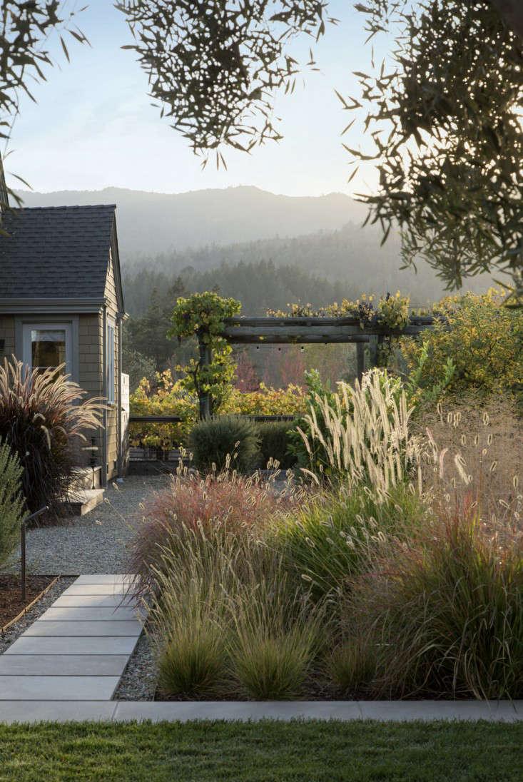 scott-lewis-vineyard-retreat-grasses-northern-california-10-gardenista