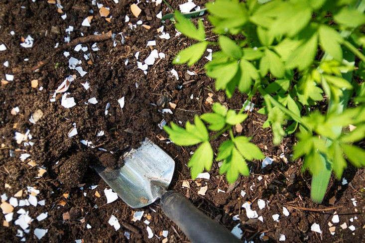 egg-shell-garden-mulch-trowel-gardenista