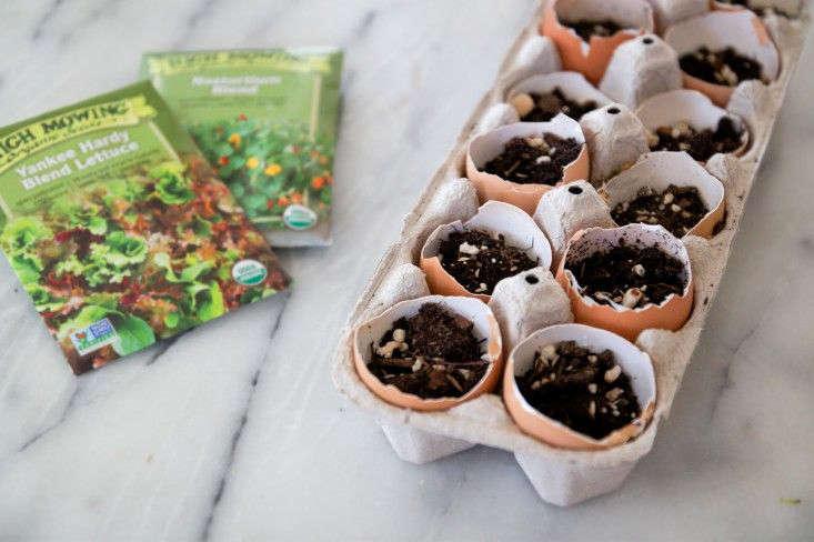egg-shell-seed-starters-gardenista