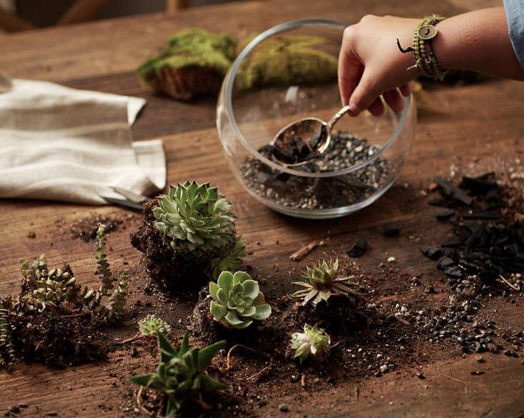 gardening-101-succulents-open-terrarium-john-merkl-gardenista