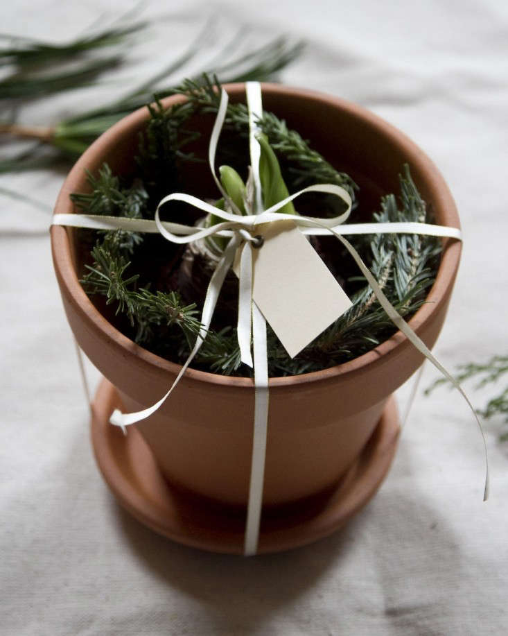 last minute holiday gifts to make at home by erin boyle | gardenista