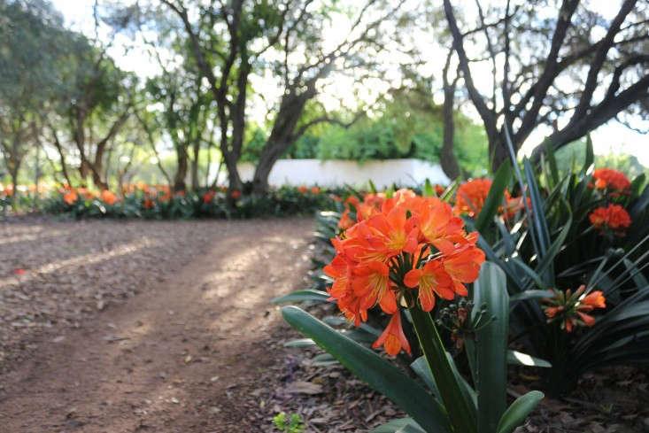 Gardening 101: Clivia