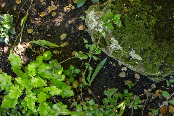 linda-tom-kubik-moss-rock-stone-gardenista-733x489