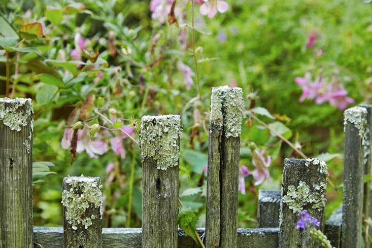linda-tom-kubik-mossy-fence-gardenista-733x489