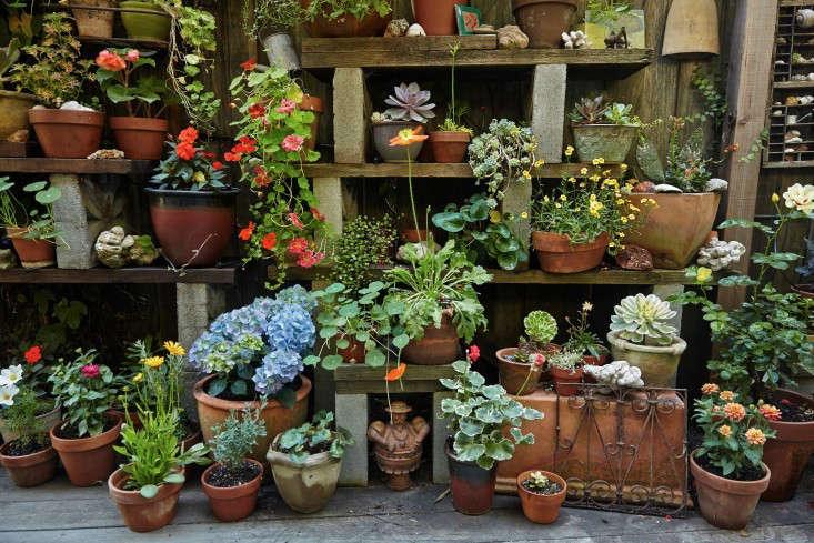 linda-tom-kubik-potting-shelves-gardenista-733x489