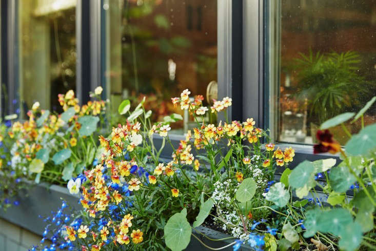 linda-tom-kubik-window-box-gardenista-733x489