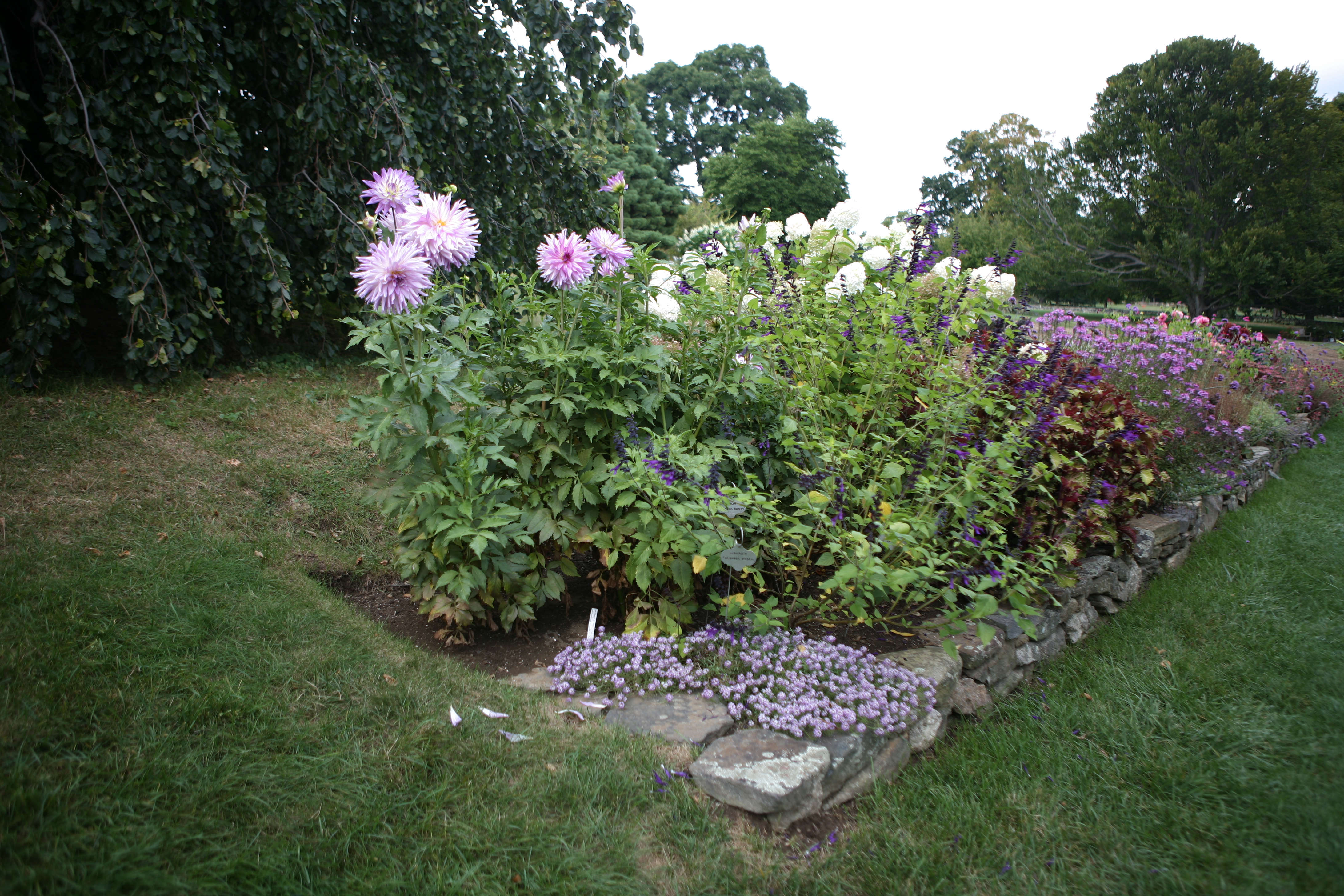 flower borders 10 essential tips from white flower farm s barb