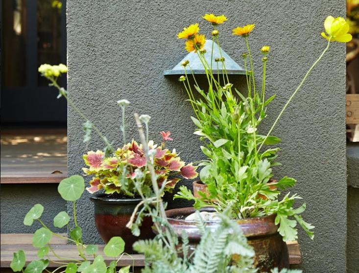 woodland-garden-tom-kubik-gardenista-11-733x558