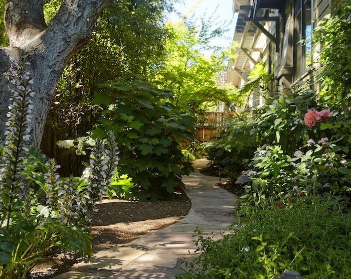 woodland-shade-garden-tom-kubik-gardenista-700x556