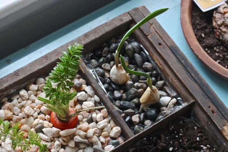 Compsot Garden garlic-733x489