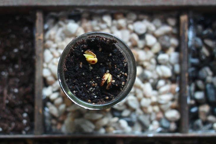 compost garden beans-733x489