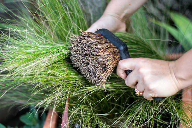 Perennial Grasses Care : Gardening how to care for perennial grasses gardenista