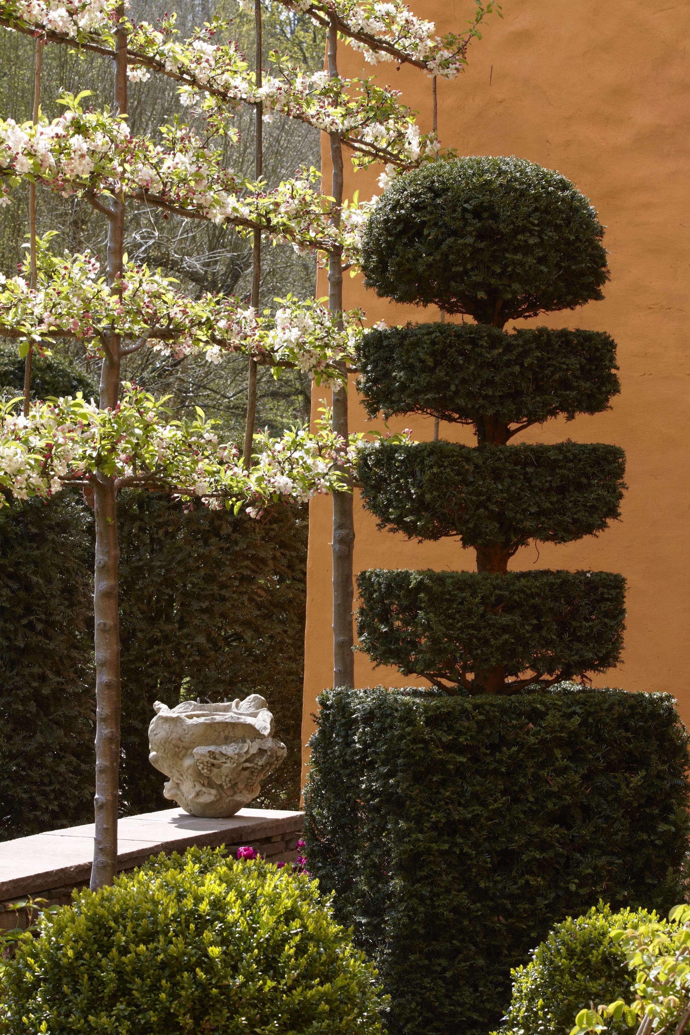 Gardening 101: Pleached Trees | Gardenista: Sourcebook for Outdoor ...