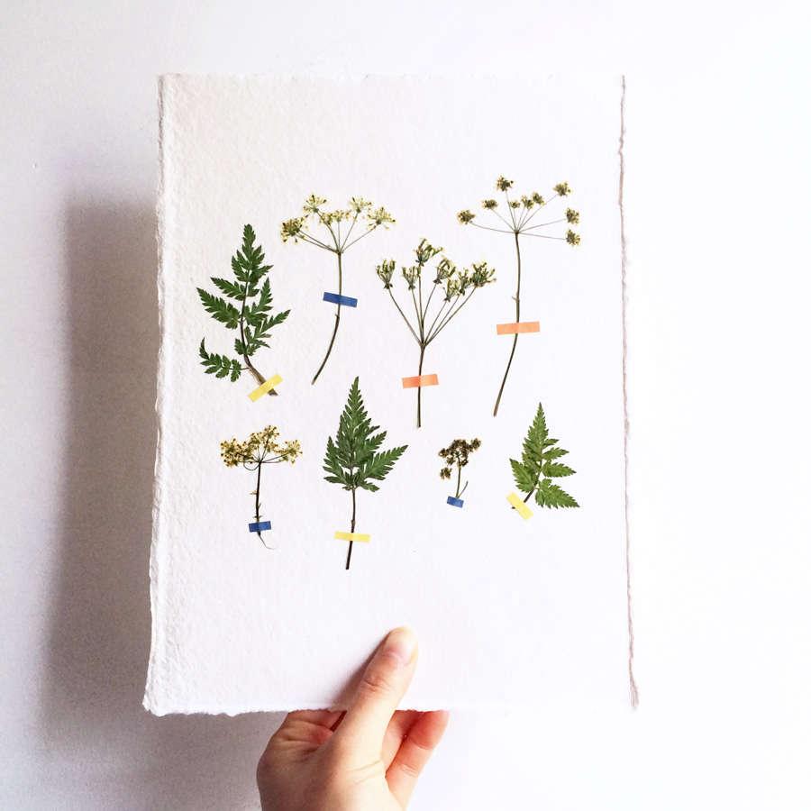 Pressed Flower Artworks from MR Studio London - Gardenista