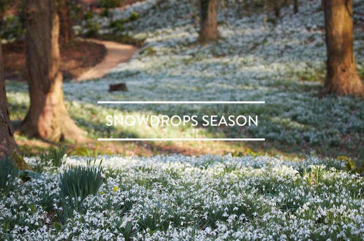 toc-snowdrops-season-gardenista