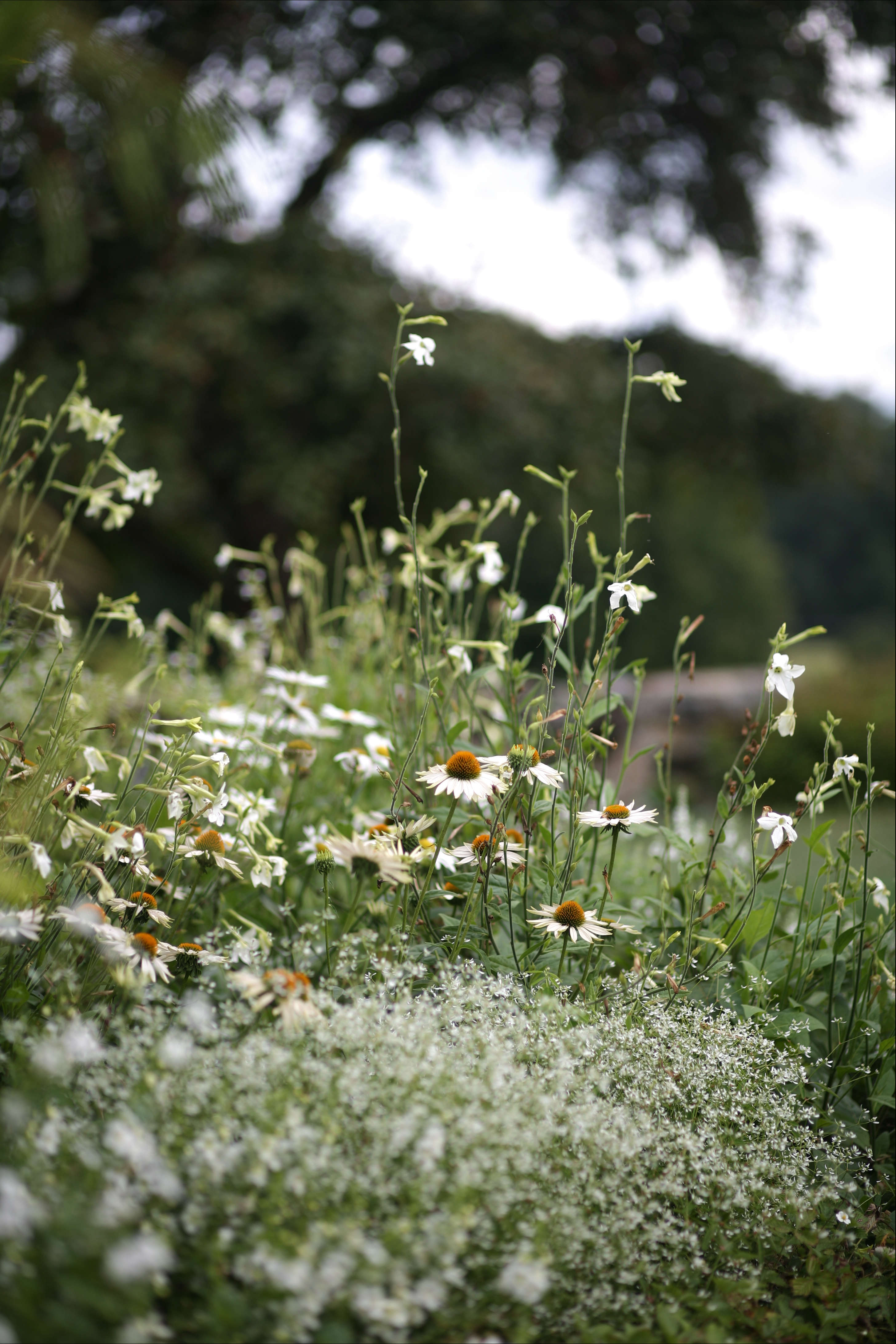 Backyard Flower Farmer : Spring Ahead 10 Tips To Get Your Garden Ready Gardenista