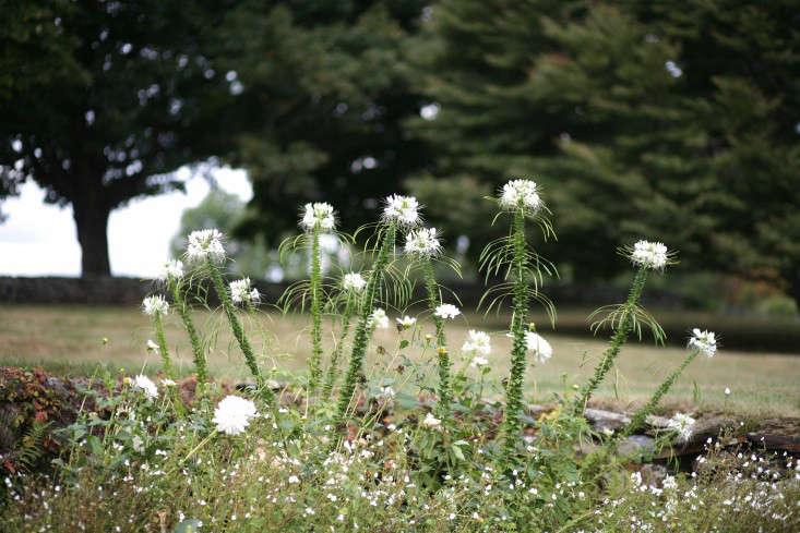 Spring Ahead 10 Tips To Get Your Garden Ready Gardenista
