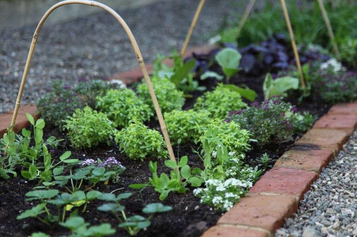 Home-Depot-Edible-Garden-Gardenista-9