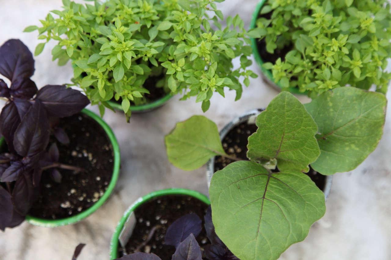 A Pet Friendly Kitchen Garden With The Home Depot Gardenista