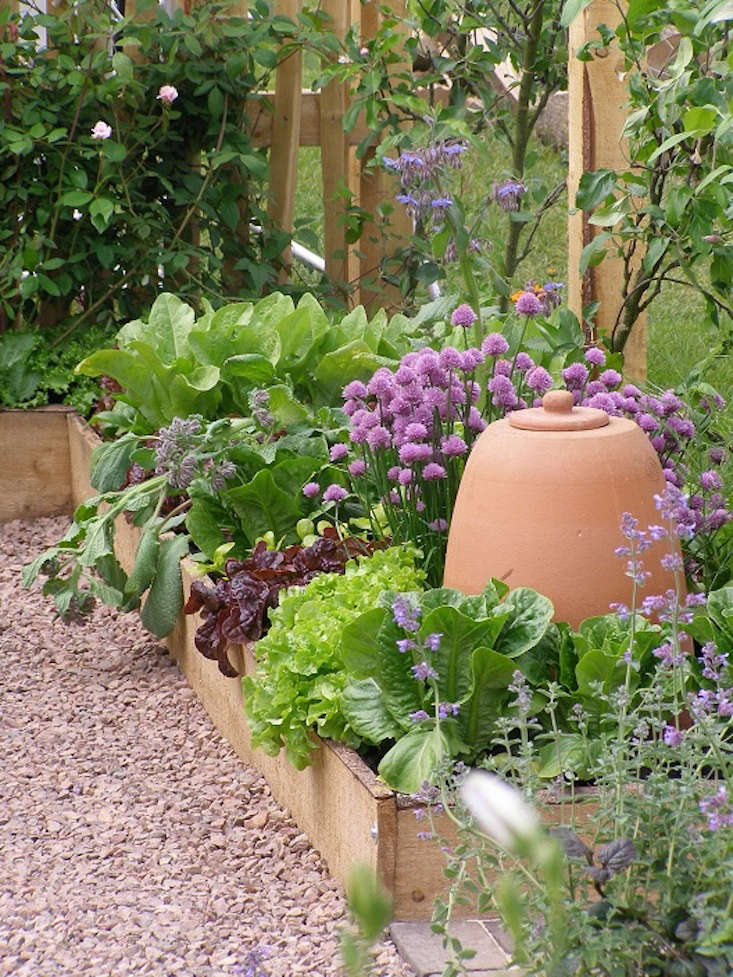 Triangular Raised Flower Bed On Large Garden Lawn Stock: 10 Easy Pieces: Terra Cotta Rhubarb Forcers