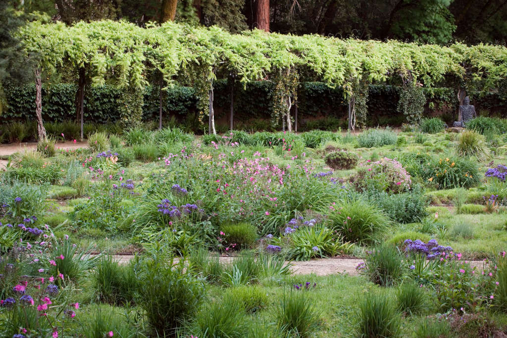 Ornamental Grasses Upstate Ny : Expert advice tips for a meadow garden from grass guru