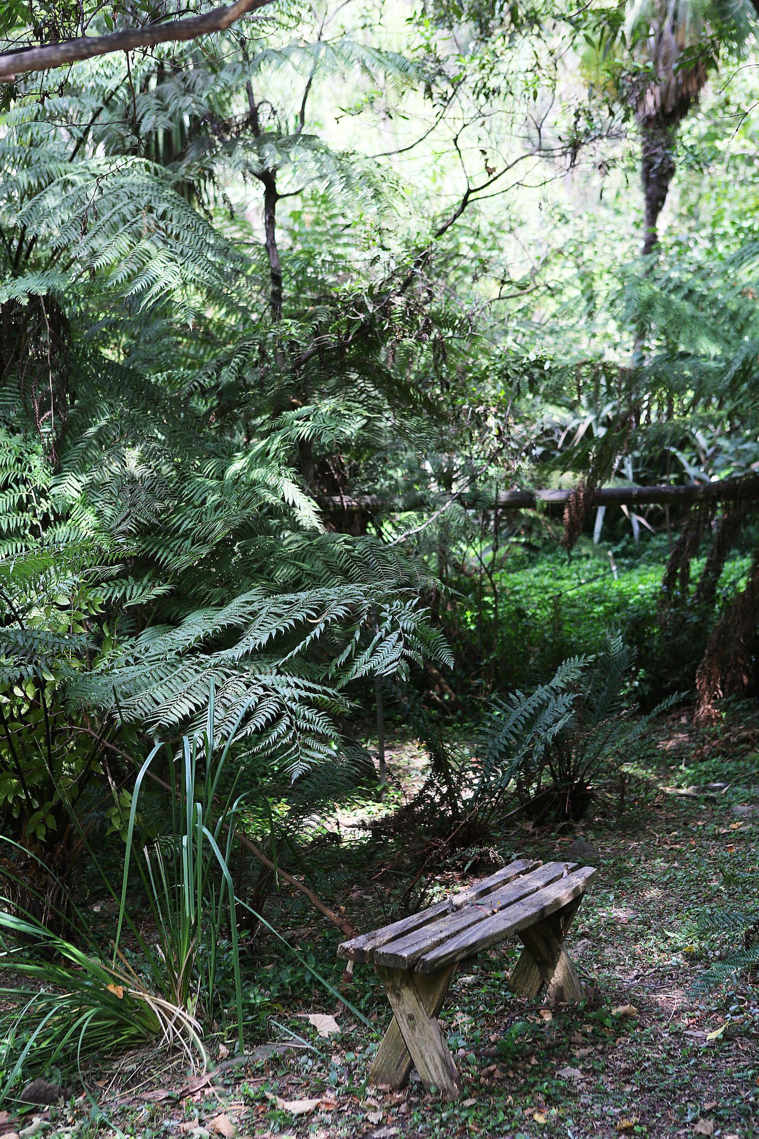 garden visit  a fern-filled forest in australia