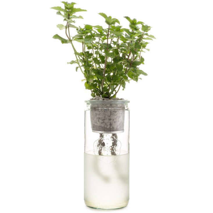 Small space gardening a kit to grow windowsill herbs gardenista - Herb gardens for small spaces gallery ...