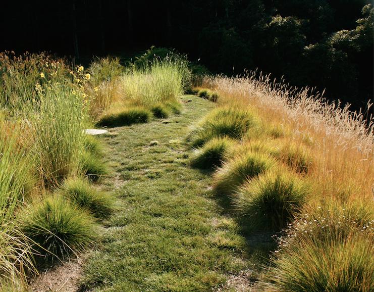 Landscape Design Books Amazon