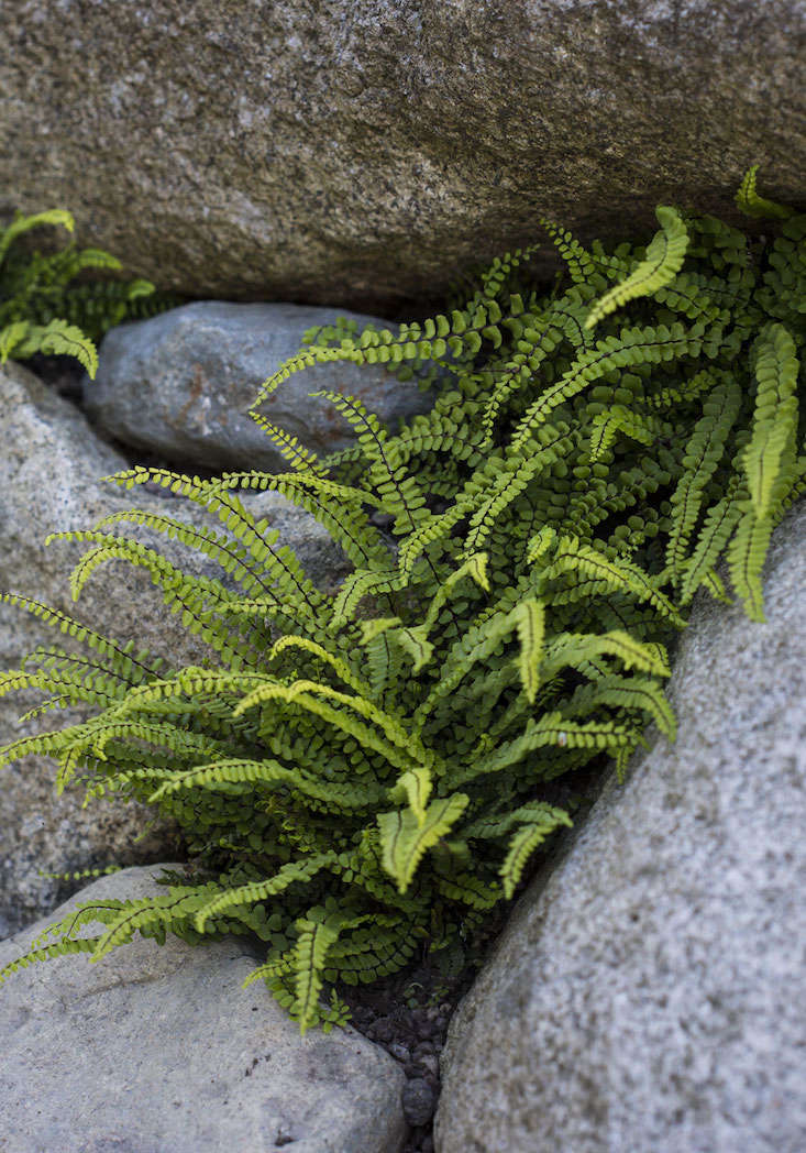 Sneak Peek Garden Design Magazine S Wild Gardens Gardenista
