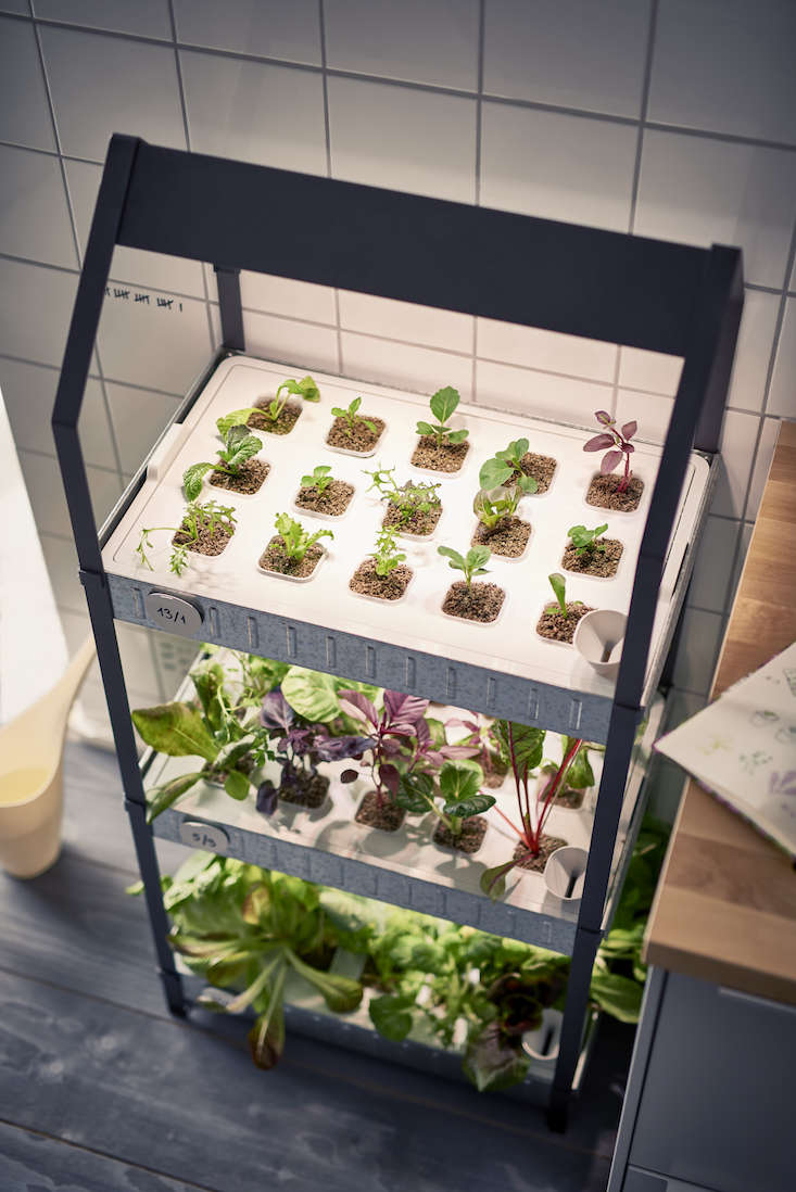 Countertop Herb Garden Kit : New from Ikea: A Hydroponic Countertop Garden Kit: Gardenista
