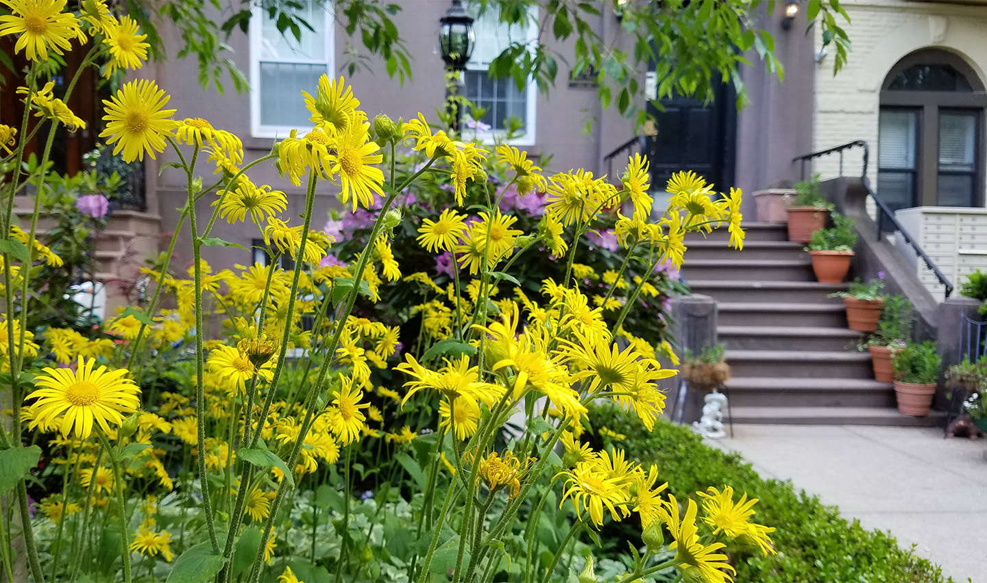 Curb Appeal: 11 Front Garden Ideas to Steal from Brooklyn ...