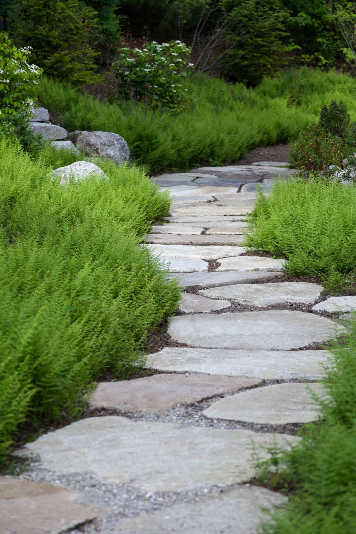 Bush Ideas For Landscaping