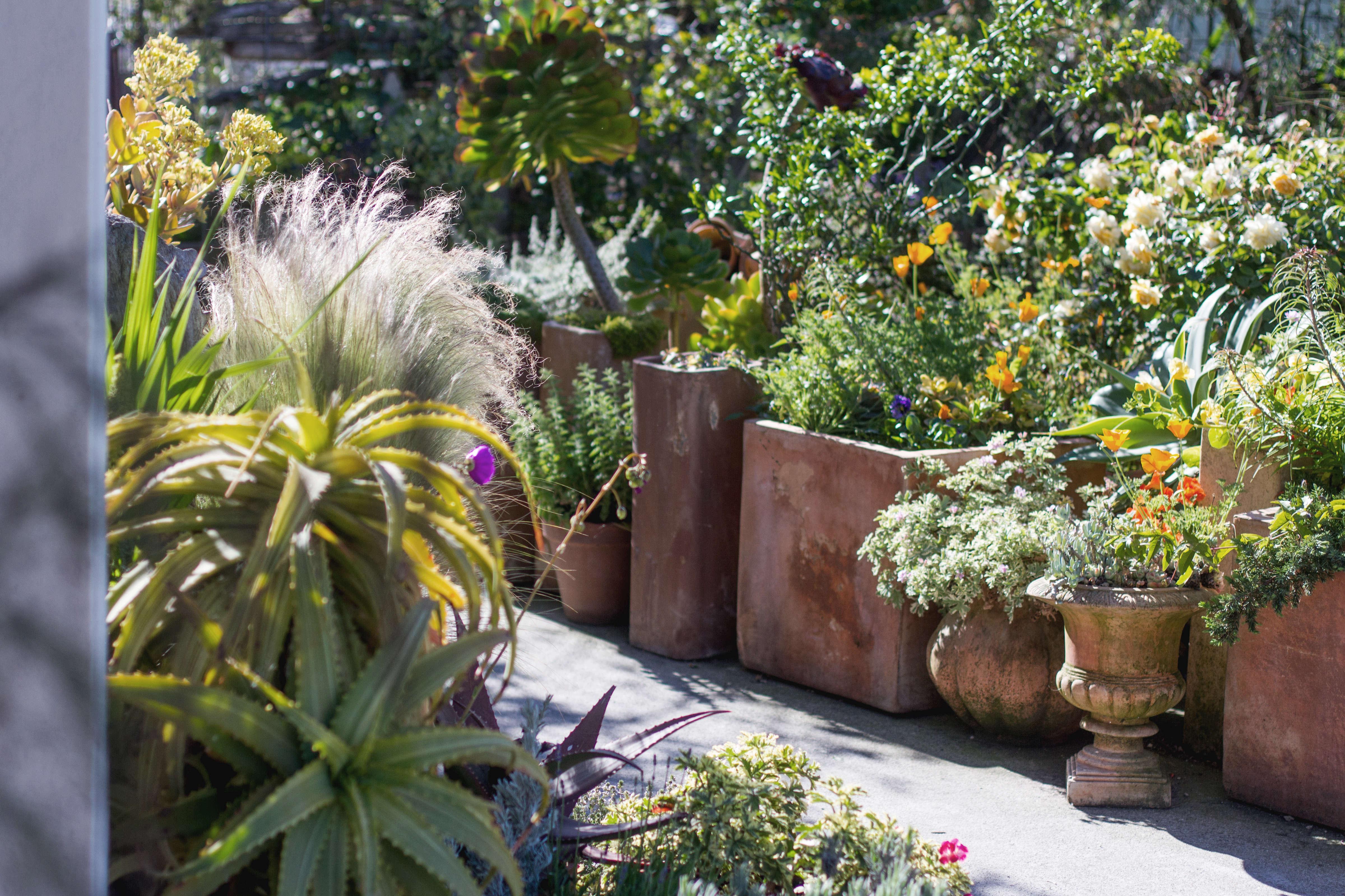 Garden Visit: My Driveway Oasis In Half Moon Bay