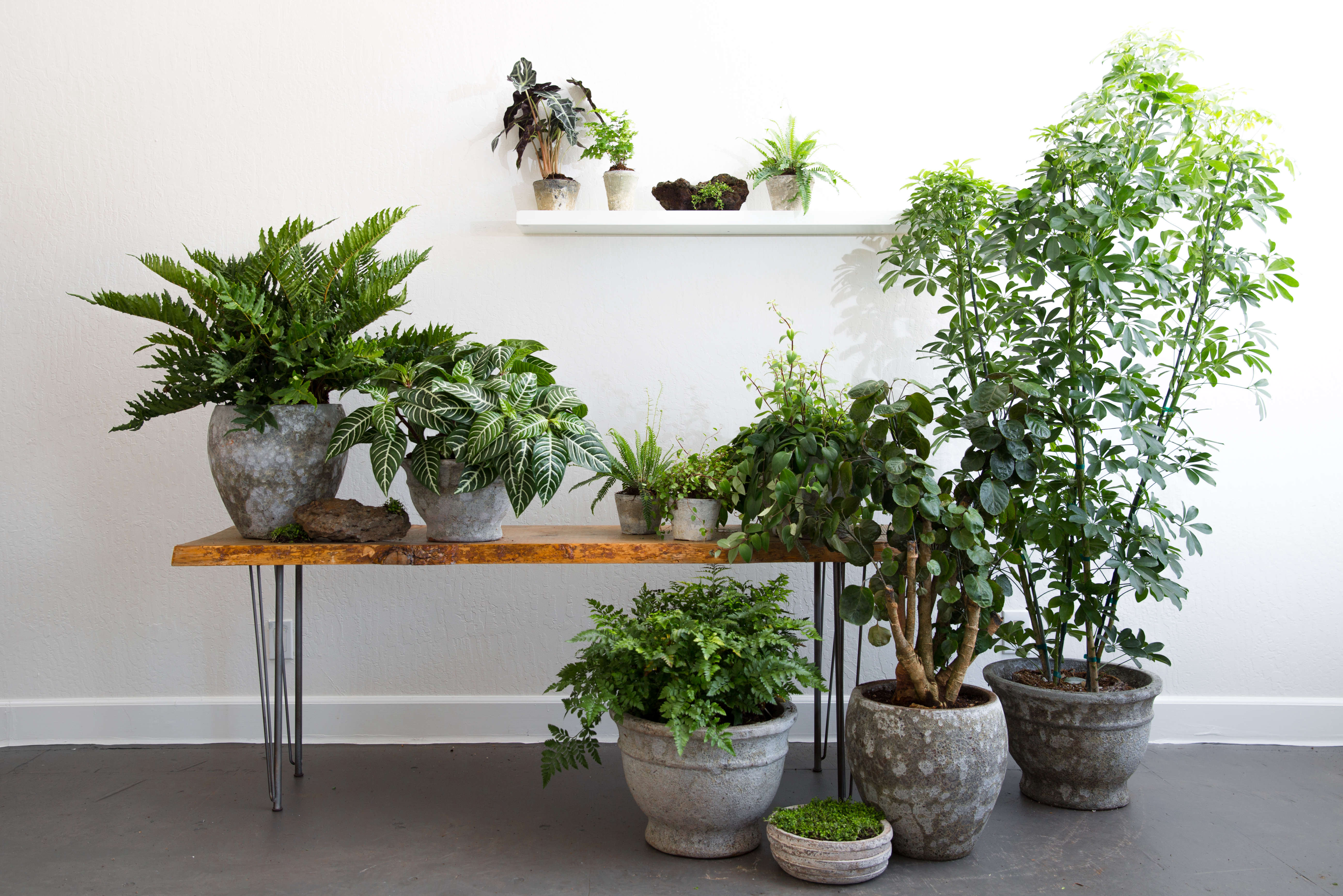 Rent-a-Houseplant: The Plant Library Delivers - Gardenista