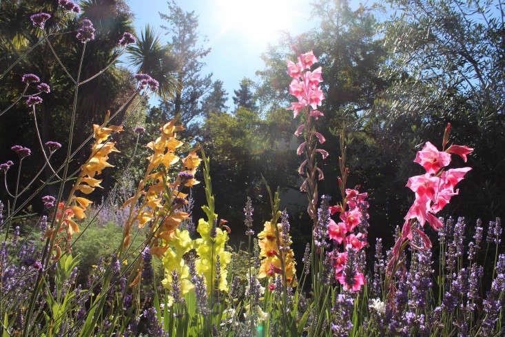 Bulbos Felices | Jardines de Noweta | Comprar Bulbos de gladiolos de Estados Unidos Grown | Envío Gratis | Glad Bulb Catálogos en línea | Bulbo alegre